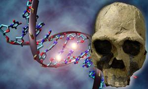 Deriv; A DNA molecule and replica of fossil skull of Homo ergaster