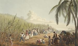 Slaves cutting sugar cane. Island of Antigua (1823).