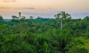 West African rain forest during amazing sunset, Liberia, West Africa