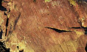 Altai Rock Art Images Reveal Insights Into Ancient Nomadic Culture
