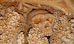 Altamura Man, surrounded by limestone deposits in the Grotta di Lamalunga