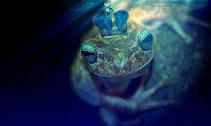 A Frog underwater with a crown.