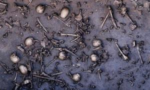 The remains of warriors lie scattered on the battlefield of Tollense.