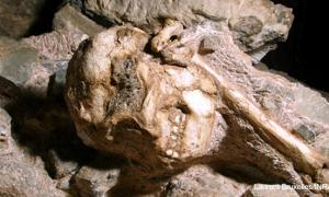 Ancient Hominid Fossil in South Africa
