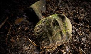 Explorers That Found Ancient Lost City of the Monkey God Almost Lose Their Faces to Flesh-Eating Parasite