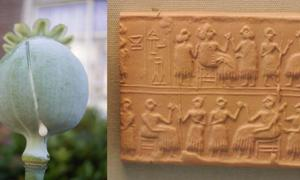 "A seedhead of an opium poppy, Papaver somniferum, with white latex. (Public Domain) Cylinder-seal of the ""Lady"" or ""Queen"" (Sumerian NIN) Puabi, one of the defuncts of the Royal Cemetery of Ur, c. 2600 BC. Banquet scene, typical of the Early Dynastic Period."