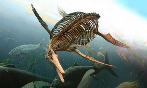 An Ichthyosaur fossilized skeleton at the Smithsonian National Museum of Natural History.