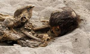 Ancient ritual sacrifice of children and llamas unearthed in PeruAncient ritual sacrifice of children and llamas unearthed in Peru