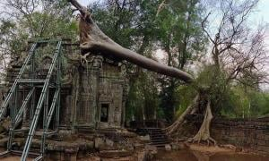 Severe storms cause ancient trees to fall at Angkor Wat. Source: Knongspor.