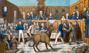 The animal trials were common in the Middle Ages. (The Trail of Bill Burns by P. Mathews, 1838)  Source: דוג'רית / Public Domain