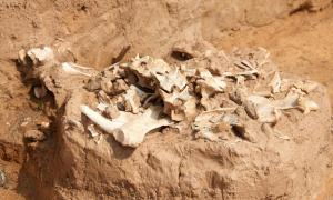 Archaeological excavations illuminate human environmental impact.