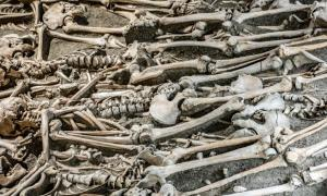 Future archaeologists will find mainly neatly arranged human remains, study says.    Source: milkovasa / Adobe Stock