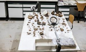 Working tables of palaeontologists in a science museum, Spain.        Source: Joaquin Corbalan / Adobe Stock