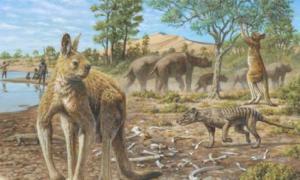 A representation of Zygomaturus with real-life but small Homo sapiens, Mungo National Park. Jane McDonald, Author provided