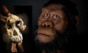Facial reconstruction of Australopithecus anamensis by John Gurche made possible through generous contribution by Susan and George Klein. Photograph by Matt Crow, courtesy of the Cleveland Museum of Natural History.