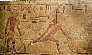 Did You Known That Baboons Were Trained in Ancient Egypt to Catch Criminals?