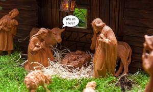 Animals are commonly found in creche sets, but surprisingly not in the Bible.