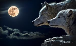 A pair of dogs/wolves and the moon