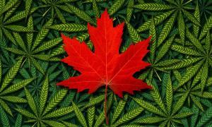 Canada legalizes marijuana concept.