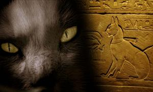 The Cat Came Back: A More Than Magical History – Part II
