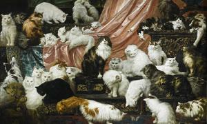 DNA Analysis Suggests Cats Chose to Be Domesticated