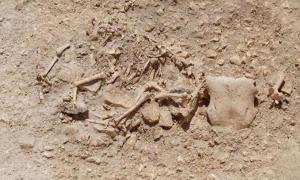 Celtic burial with hybrid-animal bone arrangements