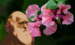 Charles Darwin (pict rider /Adobe Stock) was puzzled by flowering plants. (Pixabay License)