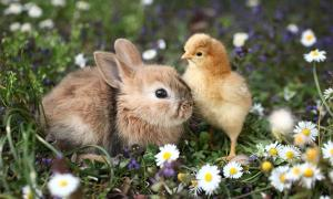 Hares and chickens were revered during the Iron Age. Source: Uros Petrovic / Adobe Stock.