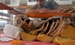 Student looks at millennia old mummy at Sanna University Mudeum, Yemen.