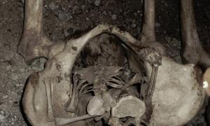 A possible example of a 'coffin birth'.