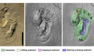 The footprints discovered on Crete