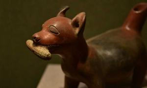 A Mayan zoomorphic ceramic of a chihuahua with a corn cob in its mouth.