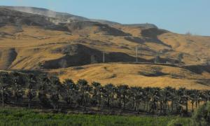 Date palms of kibbutz Gesher, Jordan Valley.