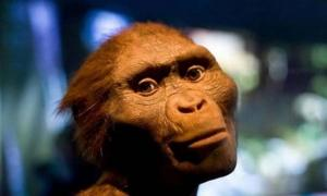 The Death of Lucy: Has a 3.2 Million-Year-Old Mystery Finally Been Solved?