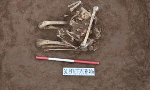 Bone remains at an archaeological site in Henan province suggest the decapitated skeleton was an ancient Chinese sacrifice. Source: Henan Provincial Institute of Cultural Relics and Archaeology/ Xinhua
