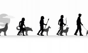 he evolution of wolf to domestic pet