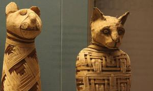 Examples of Egyptian animal mummies in the British museum. The experts don't know if the mummified animal found in Turkey is a cat, other animal, or a hoax.