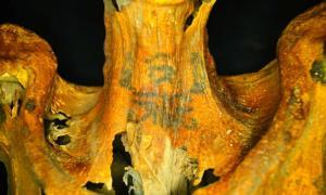 Leaving a Mark: Elaborate Tattoos Found on 3,000-Year-Old Egyptian Mummy