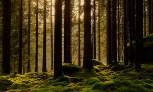 Help Save Elfdalian, the Ancient Viking Forest Language of Sweden