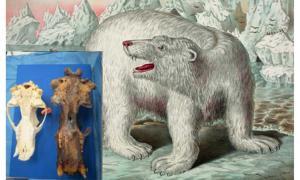 Enormous Skull Found in Alaska May Belong to the Legendary King Bear of Inuit Mythology