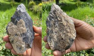 Both sides of the recent Ethiopian bone hand axe find.