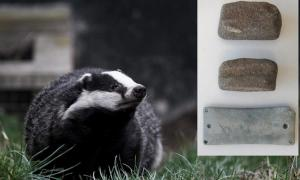 A European badger. Wrist guard and shaft straighteners found at the Netheravon burial.