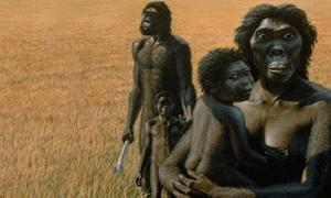 "Artistic representation of an Australopithecus family. Australopithecus afarensis like ""Lucy"" may have required some help in childbirth."