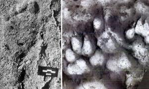 26,000-Year-Old Child Footprints Found Alongside Paw Prints Reveal Oldest Evidence of Human-Canine Relationship