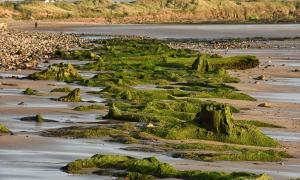 7,000-Year-Old Forest and Footprints Uncovered in the Atlantis of Britain