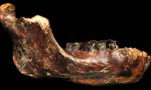 Fossilized jawbone, dubbed Penghu 1, found submerged in seafloor near Taiwan. Dated between 10,000 and 190,000 years ago. Credit: Y. Kaifu,