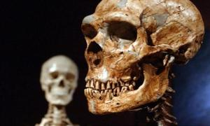 Biggest Known Genetic Difference Between Humans and Neanderthals May Be Related to Autism