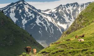 Caucassus Mountains Georgia