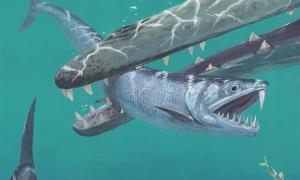 Scientists studying 55-million-year-old fossils using groundbreaking tech have revealed that after the extinction of dinosaurs, giant anchovies roamed the sea. Pictured: Artist's impression of saber-toothed anchovy being caught by an early whale.   Source: © Joschua Knüppe
