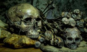 Still life with skull and withered opium head.